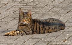 Gatto vomita schiuma bianca: cosa fare?