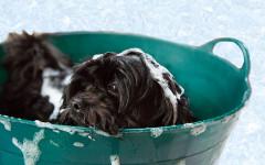 Cani odiano fare il bagnetto: perché non lo amano?
