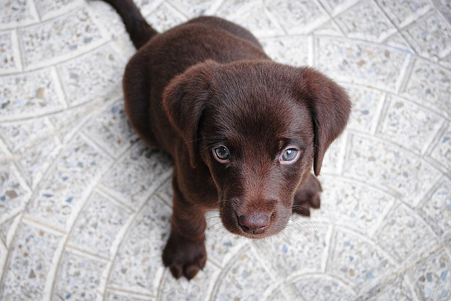 Adding oil to puppy food