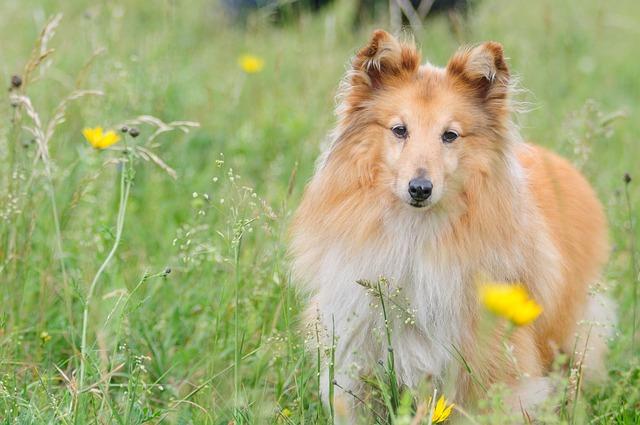 Stagione delle allergie per animali: attenzione alla primavera