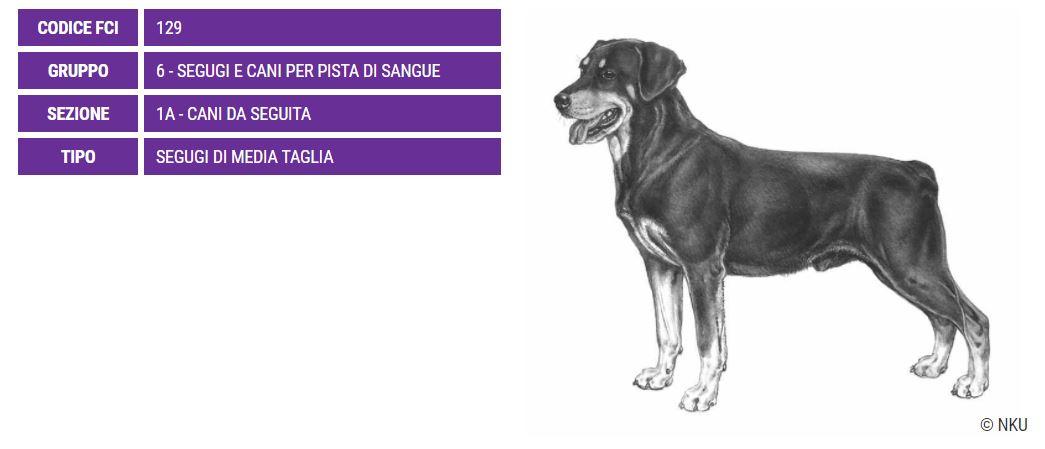 Smalandsstovare, carattere e prezzo - Razze cani