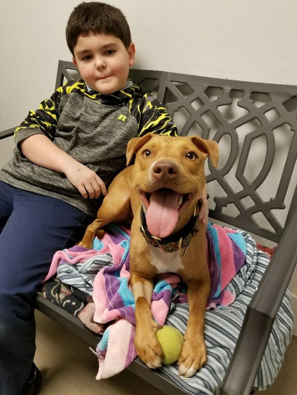Cane drogato viene salvato e adottato: lieto fine per Suzi