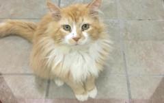 Gatto abbandonato torna a casa, ma nessuno lo vuole più