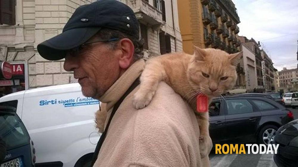 Gatto in bicicletta: Pepe famoso per le strade romane