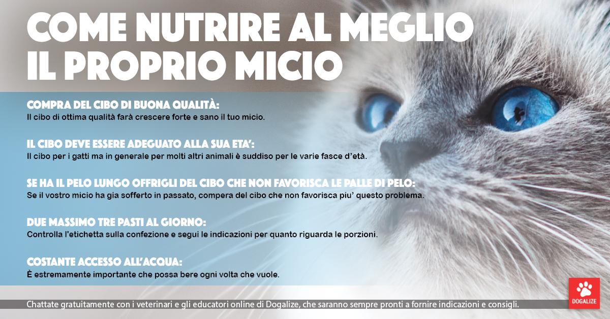 Infografica: come nutrire un gatto al meglio