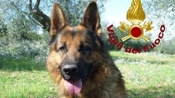 Addio a Scarck, il cane vigile del fuoco a Grosseto