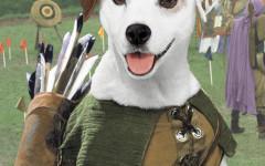 wishbone dog