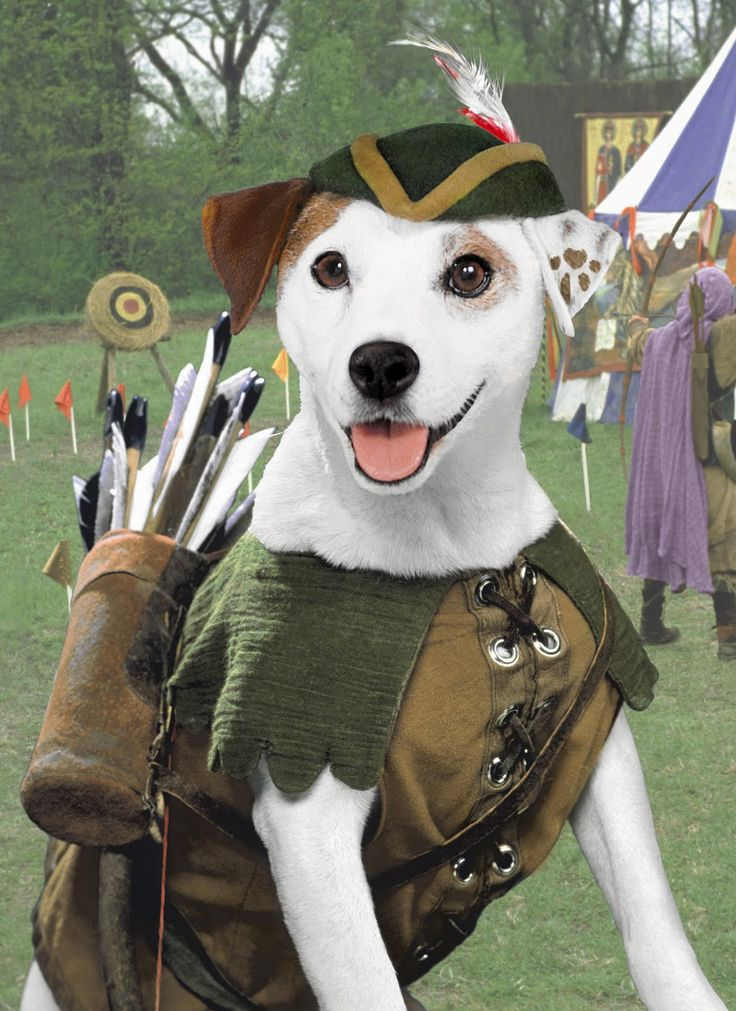 wishbone dog