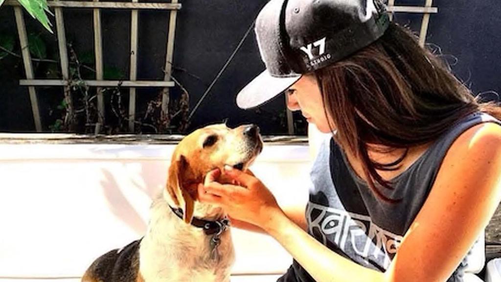 Cane adottato da Meghan Markle: la vita di Guy è cambiata
