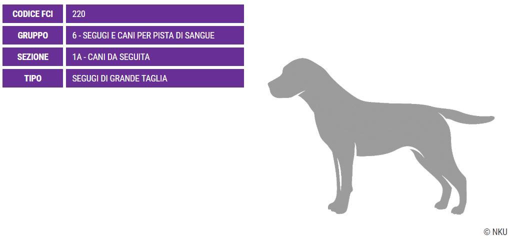 Francais Blanc et Noir, carattere e prezzo - Razze cani