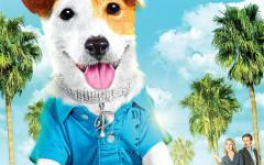 Perro Pancho: ¿conoces al perro millonario?
