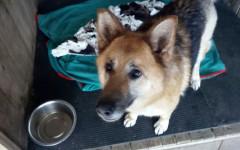 Zoe cerca casa, aiutiamola! Appello per adozione