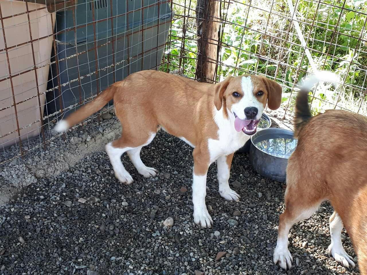 Cooper cerca casa, appello per adozione