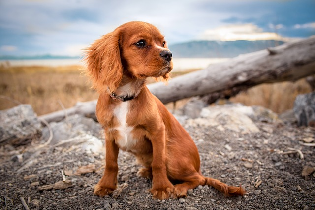 Zignature Dog Food: What you need to know