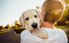 Emozioni dei cani: quali emozioni provano davvero?