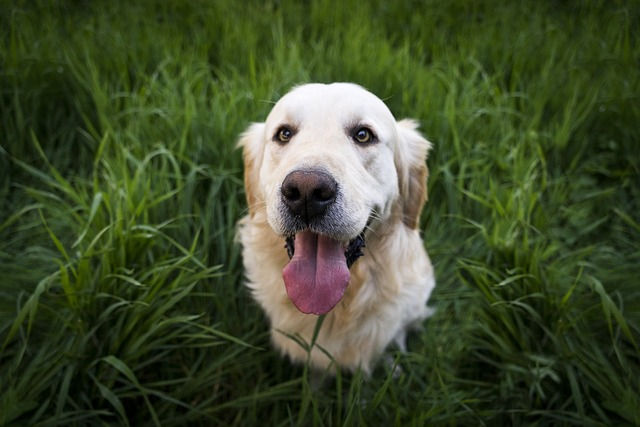 Frontline Plus for Dogs: What you need to know