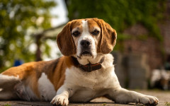 Xylitol dogs: what about Xylitol effects in dogs?