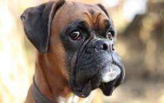 Segreti del cane: quali non ti dirà mai Fido?