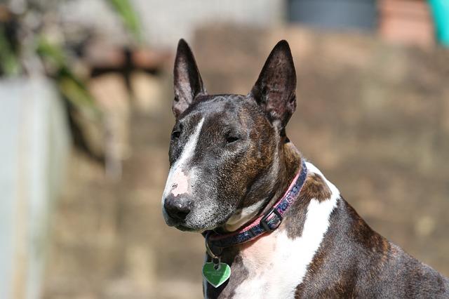 Ghiandole perianali nel cane: patologie e svuotamento