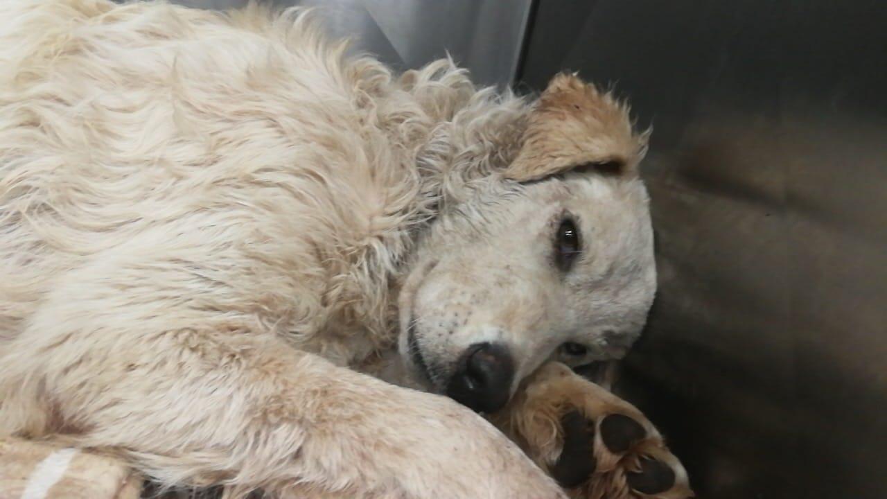Cane gettato dal cavalcavia viene curato e adottato