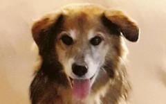 Cane Camillo avvelenato da ignoti: era l'amico dei bambini