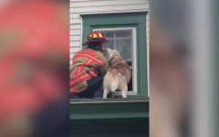 Cane bacia pompiere che lo ha portato in salvo