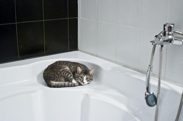 Bañar a un gato: las recomendaciones generales