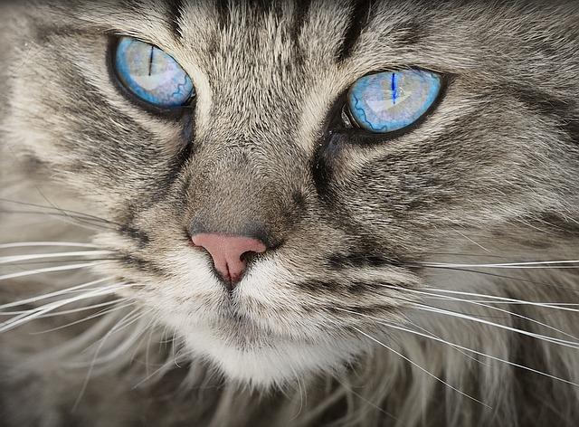 Como ven los gatos: descubre como es la visión felina