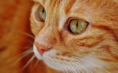 Panleucopenia nel gatto: sintomi e cura della patologia