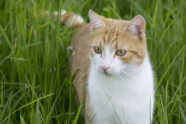 Cat grass - everything you need to know