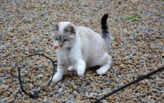Juguetes caseros para gatos: hazlos tú mismo