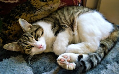 Cat grooming: how to do it and what it involves