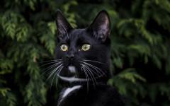 Spazzolare il gatto: quando e perché farlo?
