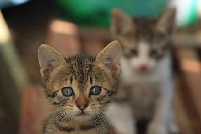Fusa dei gatti: cosa comunicano i felini con le fusa?