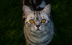 Eliminare odore della pipì del gatto in casa: come fare?