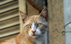 Cat scratch disease: causes, symptoms, and treatment