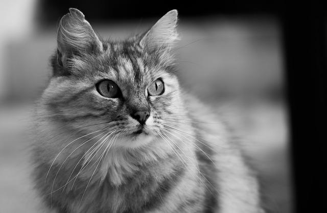 Versamento addominale gatto: cause e terapia