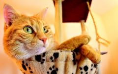 Gatti che vivono in casa: le idee per renderli sani e attivi