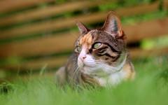 Gatto vuole andarsene di casa: come capirlo? Che fare?