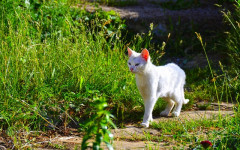 Ahuyentar gatos: consejos para ahuyentarlos sin daño