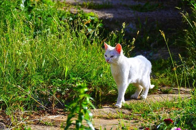 Ahuyentar gatos: consejos para ahuyentarlos sin daño - Dogalize