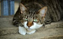 Frontline for cats: what you need to know