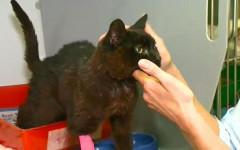 Gatto scomparso torna a casa dopo 14 anni