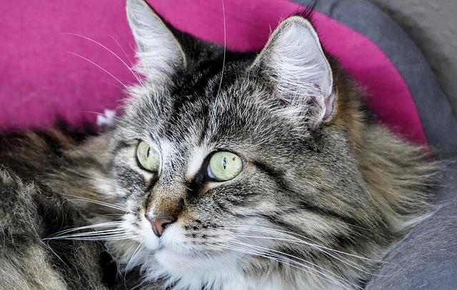 Come conquistare la fiducia del gatto: i passi da seguire