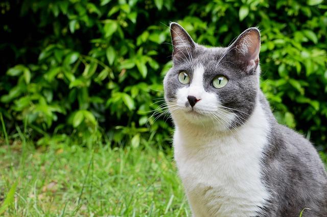 Cibo e gatti: comportamenti strani e curiosità