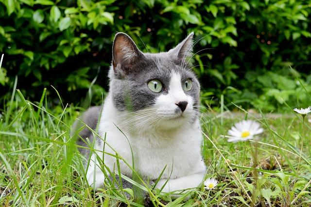 Día del gato: día para compartir y celebrar