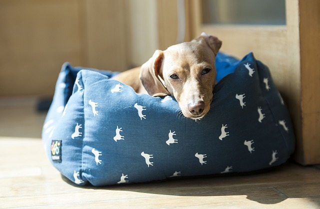 Caseta para perros grande: ¿hogar ideal para mi perro?