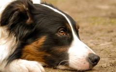 Abbandona cane in autostrada: incastrato dalle telecamere