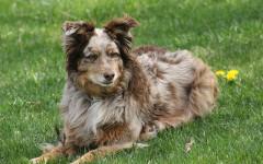 Vermifugo per cani: prodotti naturali e omeopatici