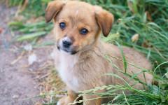 Cibo per cani Monge: alimenti umidi e secchi